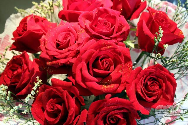 11支玫瑰花